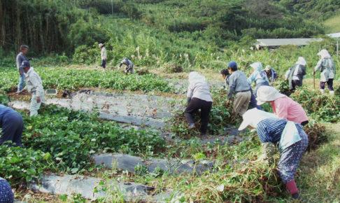"""焼酎プロジェクトとは?村営焼酎蔵でつくる芋焼酎みしま村で地域おこし"""" はロックされています。 焼酎プロジェクトとは?村営焼酎蔵でつくる芋焼酎みしま村で地域おこし"""